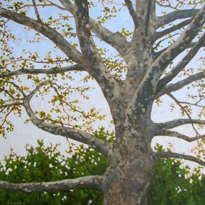 Pompeo Fine Art Studio www.JohnPompeo.com